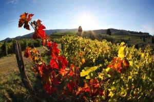 9 passi per creare un blog di(vino)